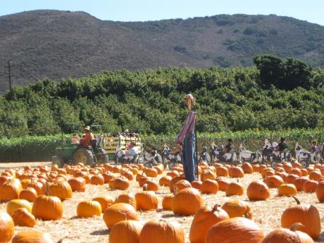 Underwood Family Farms in Moorpark, CA -- courtesy of robynneblume